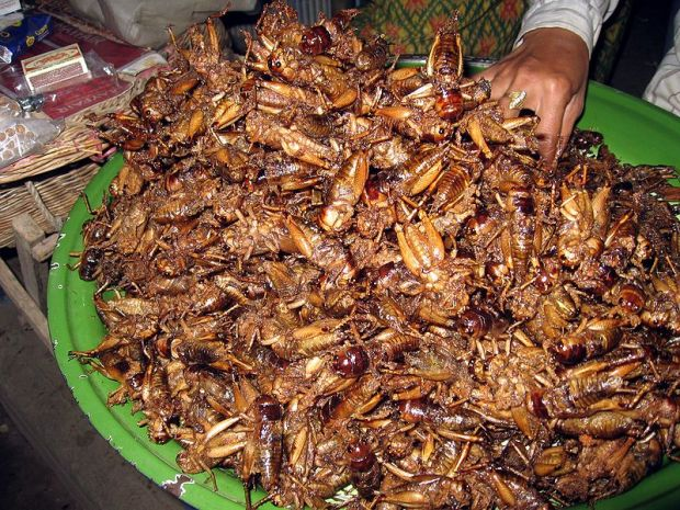 fried locusts.jpg